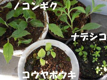 150529_sinniri3_a.jpg