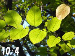 151209_kamatuka1.jpg