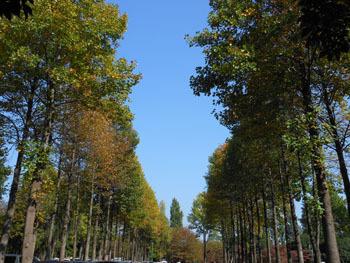 151216_yurinoki4.jpg