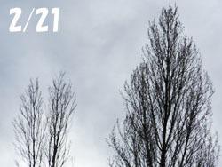 160224_poplar1.jpg