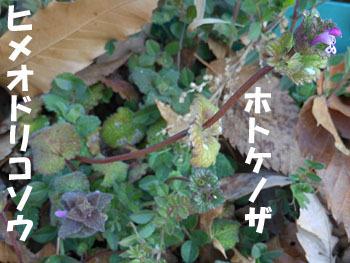 160309_h_odo_hotoke.jpg