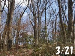 160406_zokibayasi.jpg