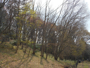 160415_zokibayasi1.jpg