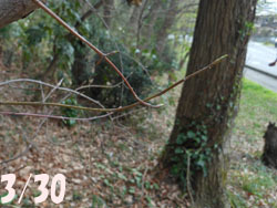 160420_turibana1.jpg