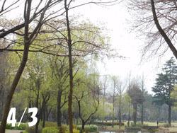 160501_park.jpg