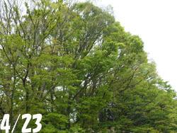 160520_zokibayasi1.jpg