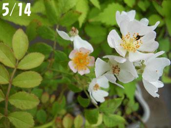 160720_noibara2.jpg