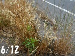 160807_karasumugi1.jpg