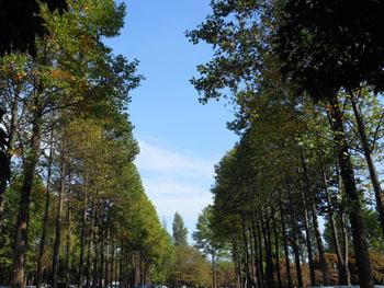 161101_yurinoki2.jpg
