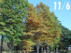 161212_rakuusho1.jpg