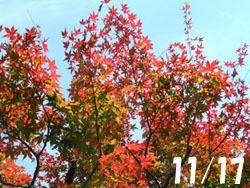 161213_iroha_k1.jpg