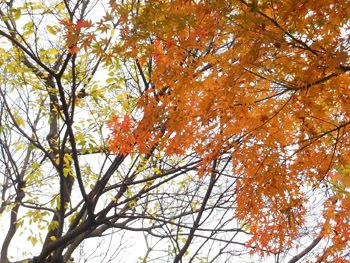161222_iroha_k2.jpg