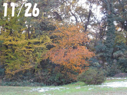 161222_park1.jpg