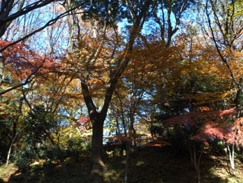 161223_ueno11.jpg