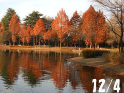 170111_park.jpg