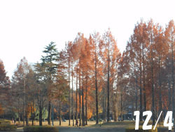 170113_park.jpg