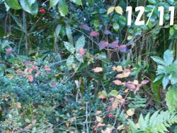 170119_shamen1.jpg