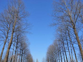 170201_yurinoki3.jpg