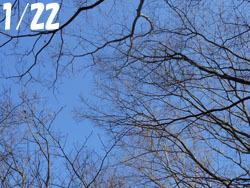 170207_zokibayasi.jpg