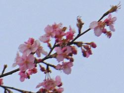 170305_kawadu_z5.jpg