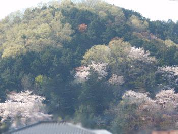 170508_oyama2.jpg