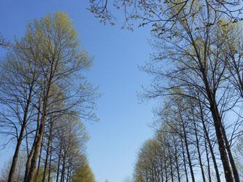 170511_yurinoki7.jpg