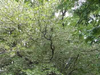 170703_egonoki1.jpg