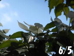 170806_yamabosi1.jpg