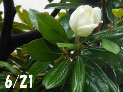 170818_taisanboku.jpg