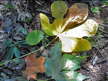 171015_leaf.jpg