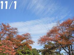171110_sakura.jpg