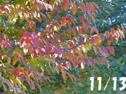 171219_keyaki1.jpg