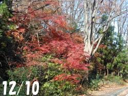 180111_iroha_k01.jpg