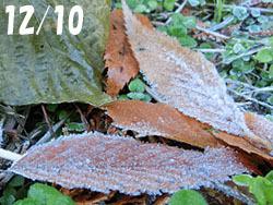 180116_frost1.jpg