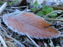 180116_frost6.jpg