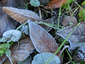 180116_frost8.jpg