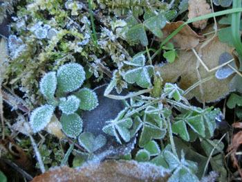 180117_frost1.jpg