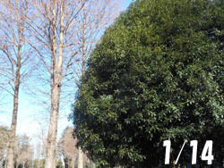 180214_k_mokusei1.jpg