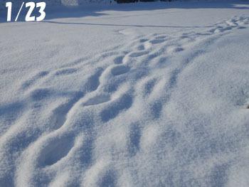180216_snow03.jpg