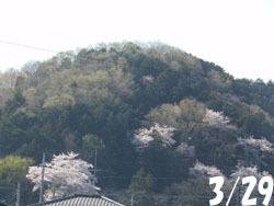 180509_sakura1.jpg