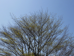 180513_mizuki1.jpg