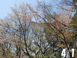 180515_zokibayasi1.jpg