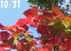 181129_yamabousi1.jpg