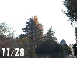 181217_park.jpg