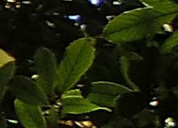 181221_arakasi.jpg