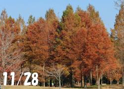 181224_meta_raku.jpg