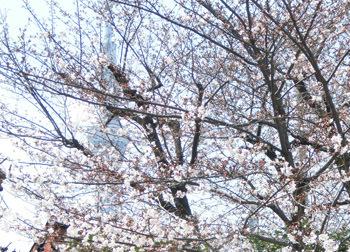 190506_skytree.jpg