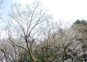 190516_yanagi_ka3.jpg