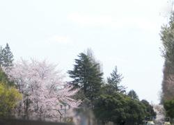 190604_park.jpg