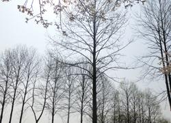 190604_yurinoki1.jpg